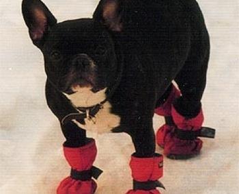 Ботинки для собак своими руками видео